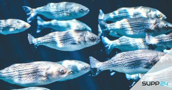 Viscollageen voor de huid | Alles wat je moet weten